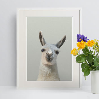 Nursery Decor Peekaboo Llama Animal Print