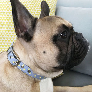 Grey Polka Dot Dog Collar - new in pets