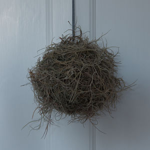 Handmade Orb Of Spanish Moss