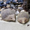 Pair Of Hedgehog Garden Sculptures