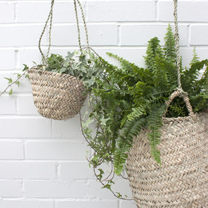 Hanging Basket - living room