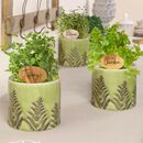 Set Of Three Personalised Fern Green Ceramic Planters