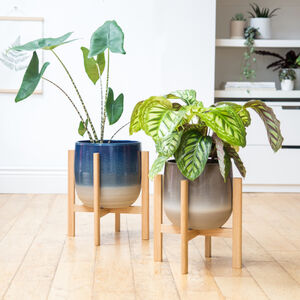 Large Plant Stands