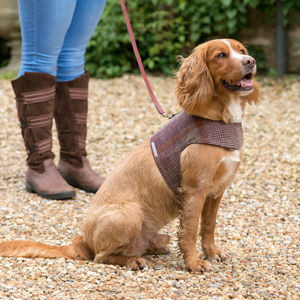 Luxury Tweed Dog Harness - dogs