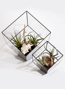 Build Your Own Glass Terrarium