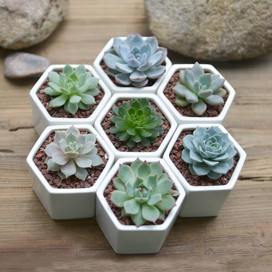 Hexagon Mini Planter Choice Of Succulent Or Cacti By