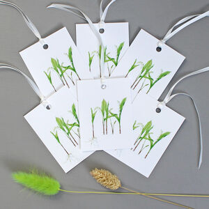 Floral Gift Tags With Lily Of The Valley Illustrations