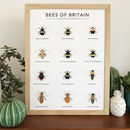 'Bees Of Britain' Print