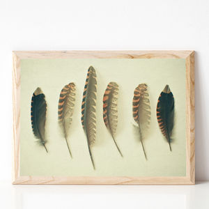 Feathers No.Two Photographic Print