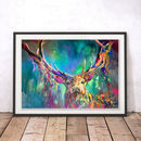 Woodland Stag By Sue Gardner Fine Art Print