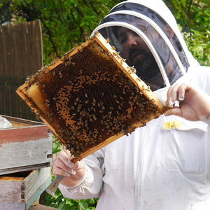 Urban Beekeeping And Craft Beer For Two Experience 2019 - gifts for him