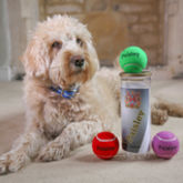 Personalised Dog Tennis Balls - pets