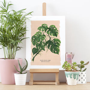 Cheeseplant Illustrated Digital Print - nature & landscape