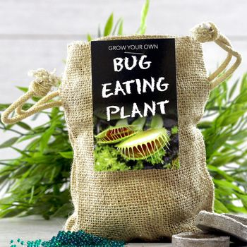 Grow Your Own Bug Eating Plant Jute Set
