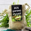 Grow Your Own Bug Eating Plant