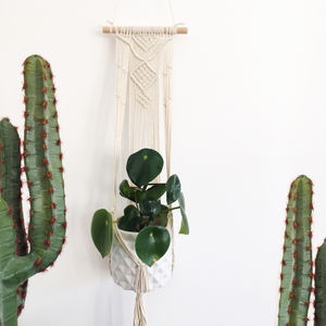Macramé Hanging Plant Holder - the greenhouse edit