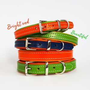 Padded Leather Dog Collar - out and about