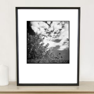 Flora, Santa Maria Beach Photographic Art Print