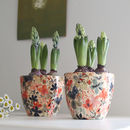 Daisy Tango Plant Pot With Hyacinth Bulbs