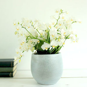 Wild Orchid Multi Flora Plant - wedding gifts