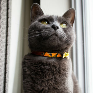 Cat Collar In Various Styles