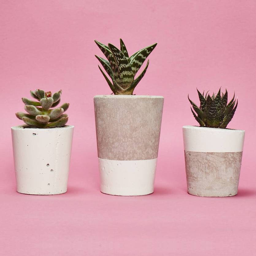 Concrete plant pot with cactus or succulent in white by hi cacti concrete plant pot with cactus or succulent in white mightylinksfo