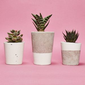 Set Of Three White Concrete Pots W/Cacti And Succulents - gifts for her