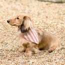 Stars And Stripes Dog Neckerchiefs