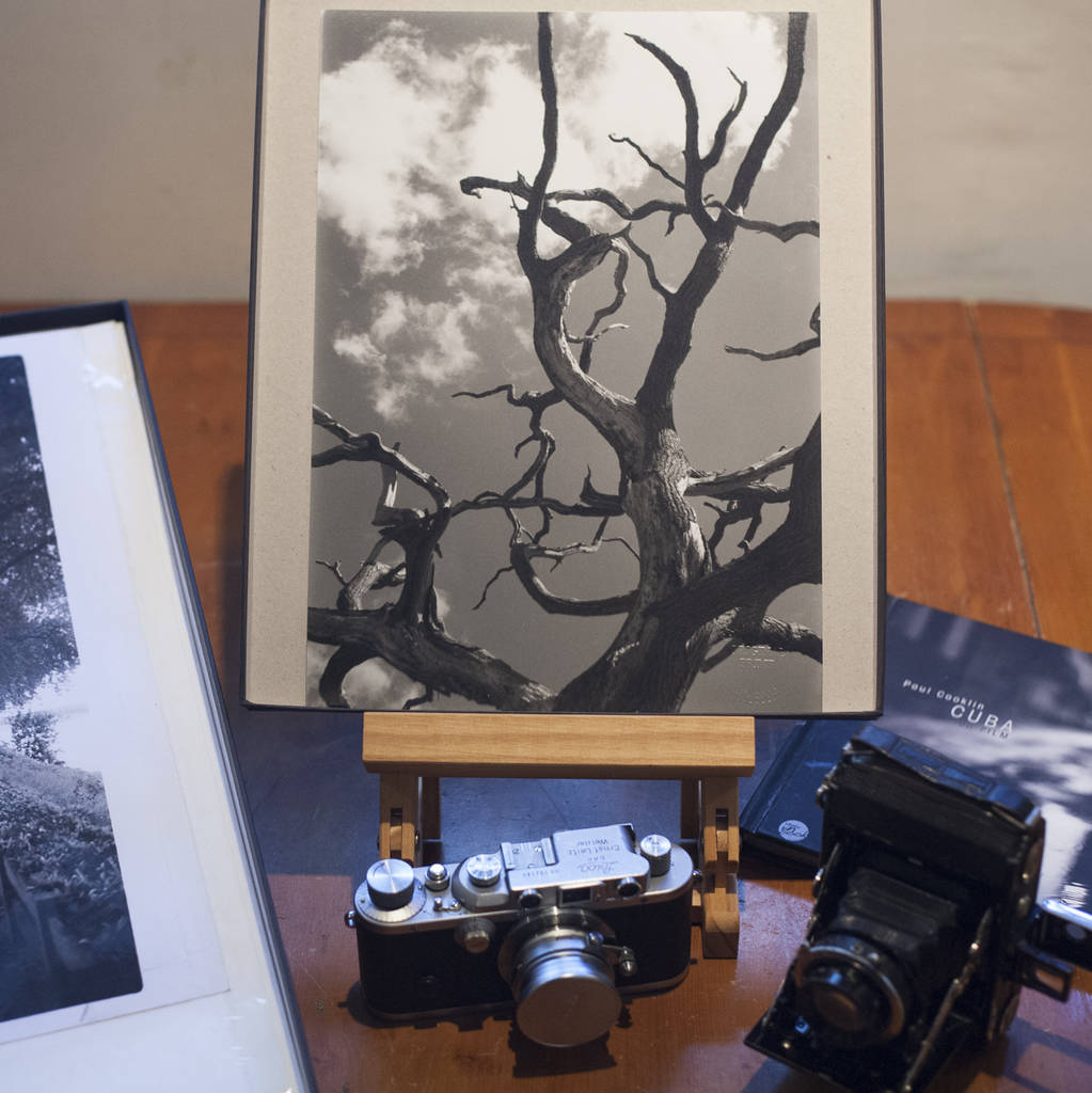 Abstract Tree Branches, Signed Silver Gelatin Print