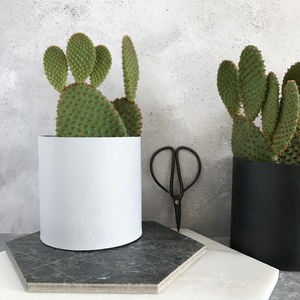 Bunny Ear Cactus Gift - fresh & alternative flowers