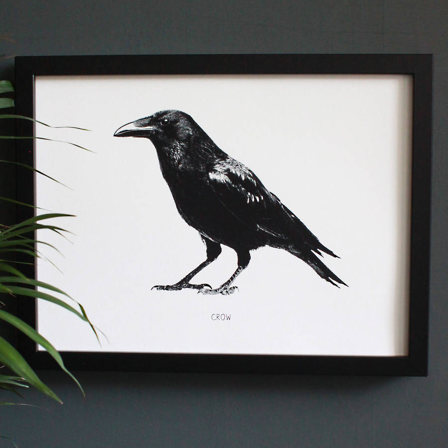 encyclopaedic inspired fine art print, black crow by mimi ...