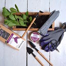 Grow Your Own Tea Gardening Gift Set