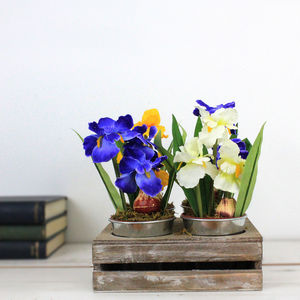 Silk Summer Bulbs In Four Little Zinc Buckets - home accessories