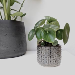 A Textured Plant Pot - home accessories