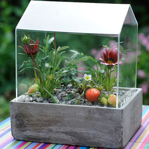 Mini Table Top Greenhouse