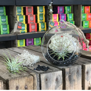 Glass Terrarium With Air Plant Tillandsia Guatemala - home accessories