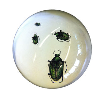 Beetles Crawling Paperweight