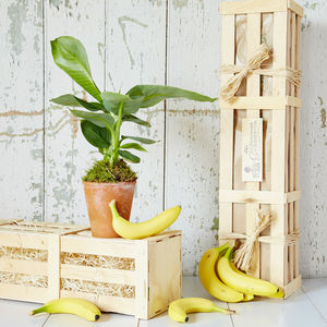 Banana Fruit Tree Gift - for him