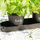 Set Of Three French Style Herb Planters And Tray
