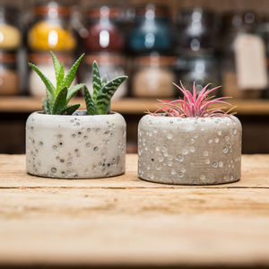 Concrete Plant Pot With Succulents - pots & planters