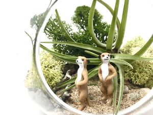 Meerkat Diy Air Plant Terrarium Kit - flowers, plants & vases