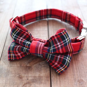 Dougal Tartan Bow Tie Collar - walking