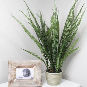Artificial Fern Pot Plant