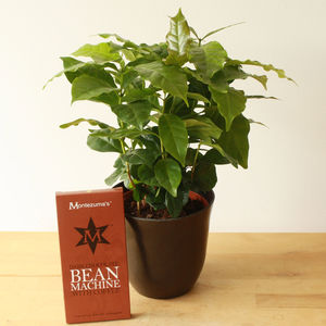 Grow Your Own Coffee Gift Set - gifts for gardeners