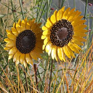 Sunflower Garden Sculpture - art & decorations