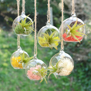 Small Hanging Glass Vase Air Plant Terrarium - plants & trees