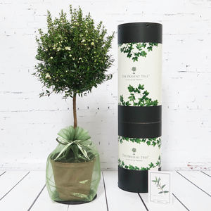 Myrtle 'Tree Of Harmony And Joy' Gift - flowers, plants & vases