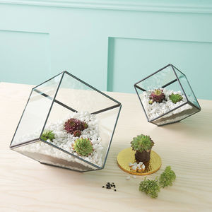 Square Terrarium With Planting Set - flowers & plants