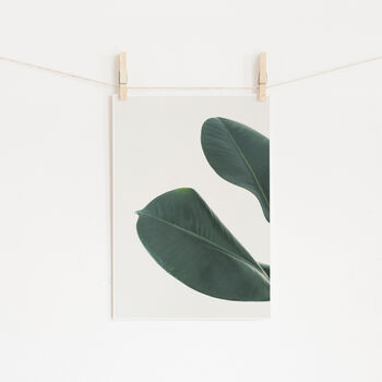 Rubber Fig Leaves I Photographic Plant Print