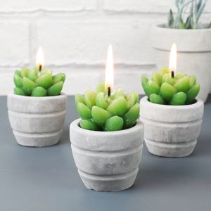 Set Of Three Small Cactus Candles In Cement Pots
